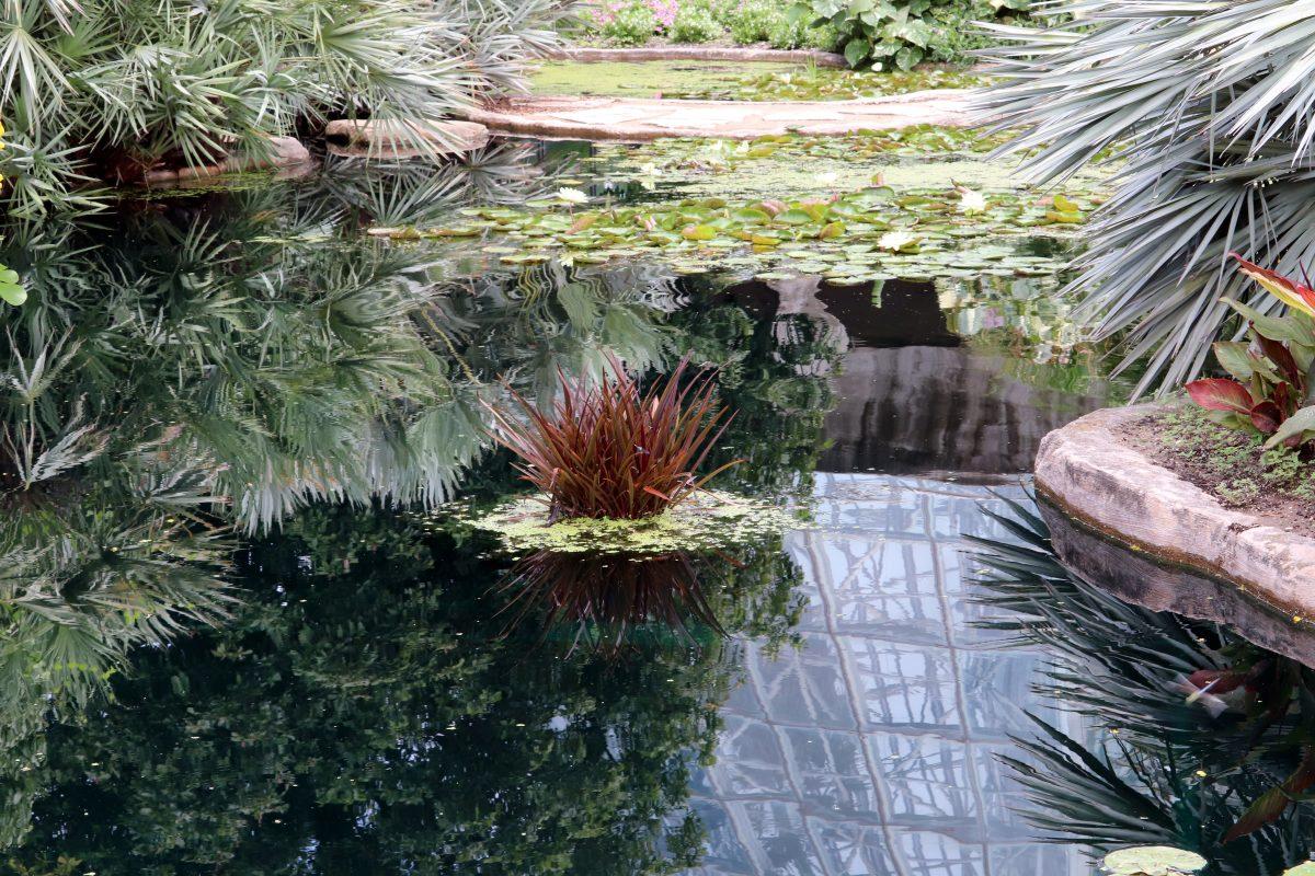 Botanical Garden, Things To Do In San Antonio