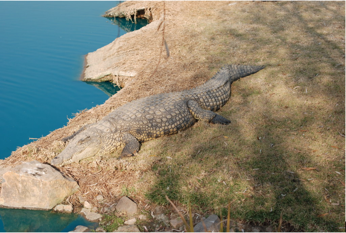 If you have a penchant for death-defying, adrenaline-pumping activities, then you won't find a more thrilling experience than at the Croc City Crocodile & Reptile Park!
