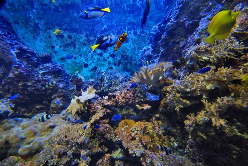 Farglory Ocean Park