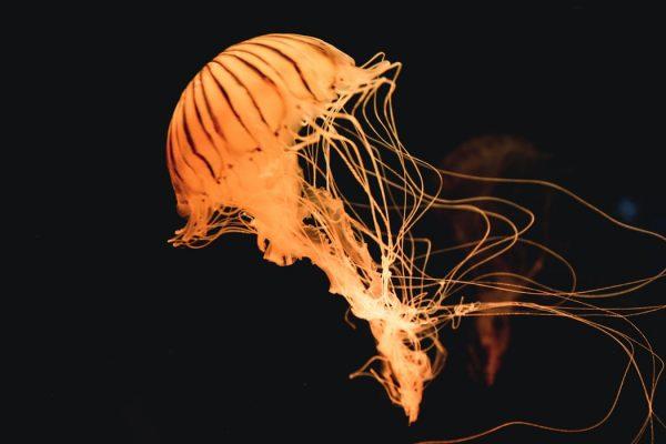 Your Complete Guide to Osaka Aquarium