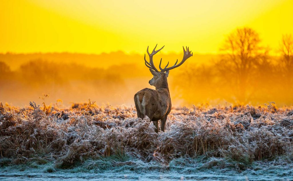 Things to do in Hoge Veluwe National Park