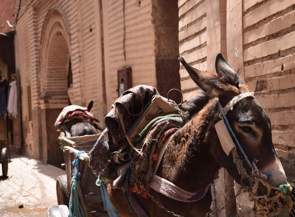 Marra 1 - The 10 Most Beautiful Scenery And Places To Visit In Morocco