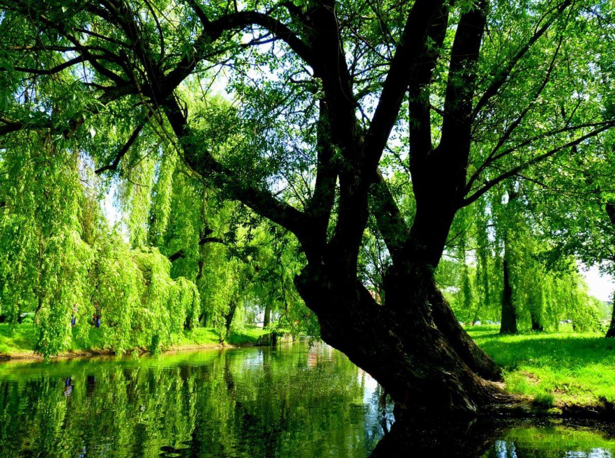 Countryside of Masuria Poland