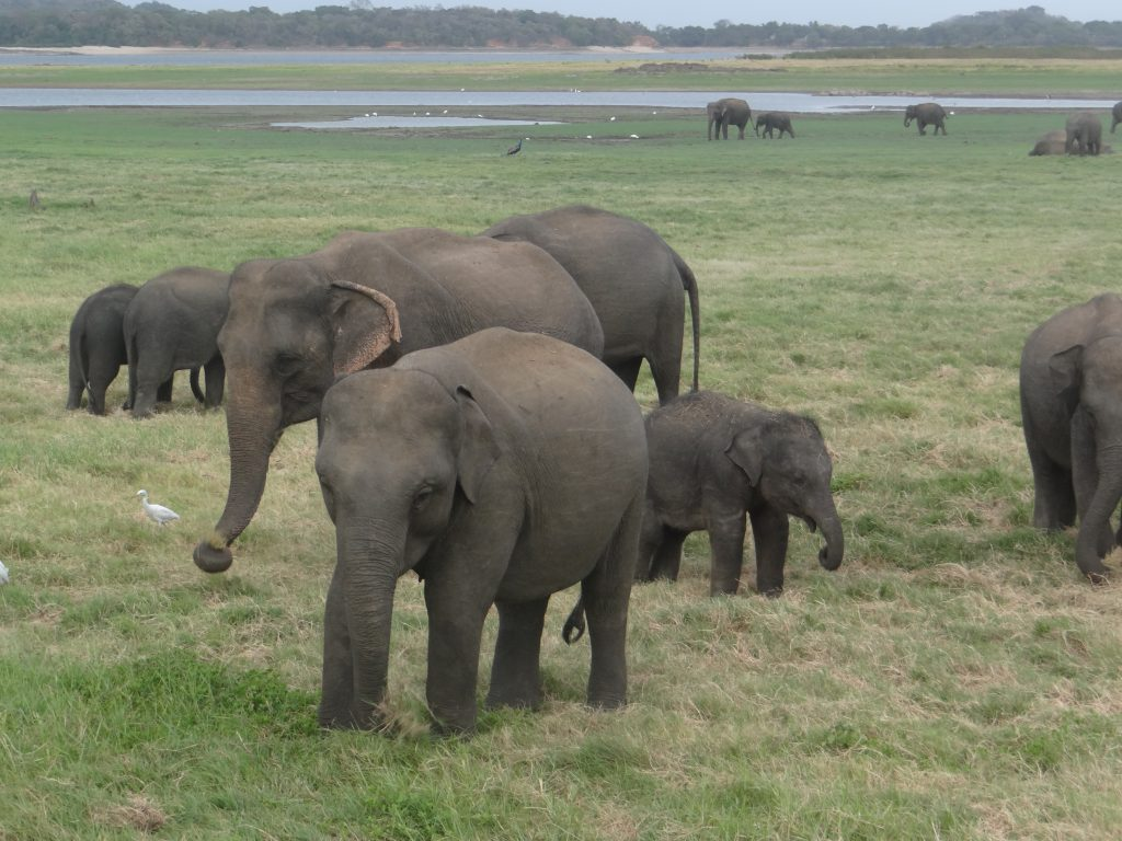 SL Elephants