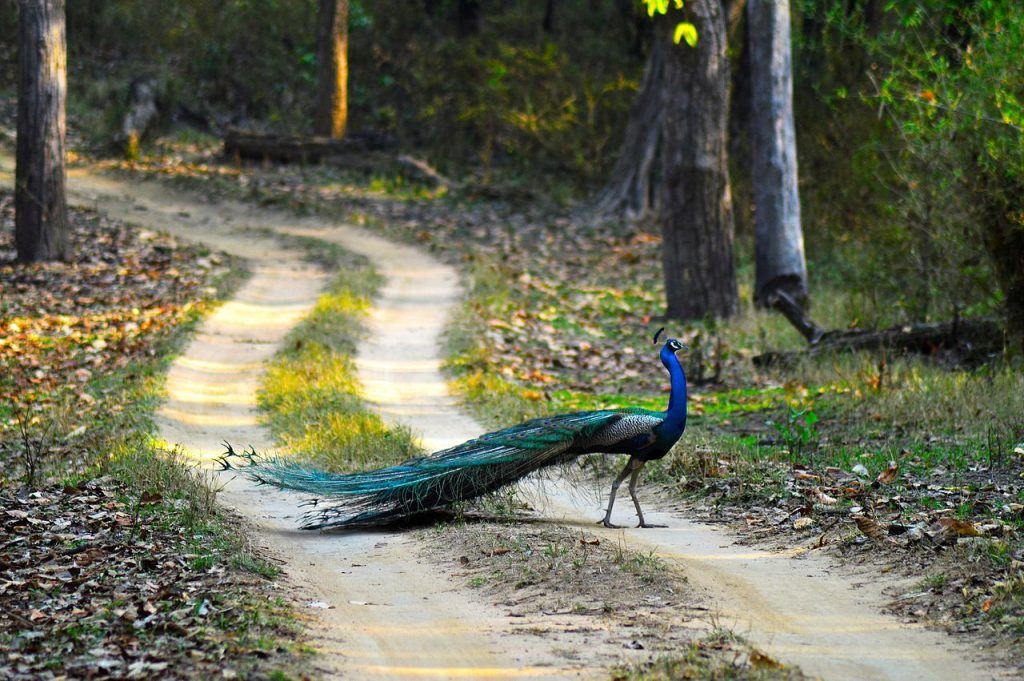 peacock, national parks in india