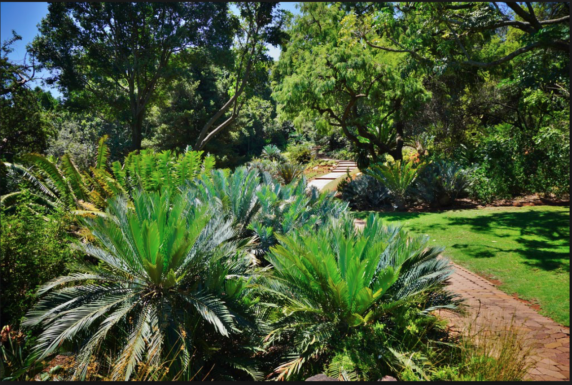 As one of South Africa's nine National Botanical Gardens, Pretoria displays several different areas of carefully designed gardens.