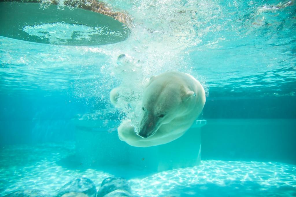China Aquarium