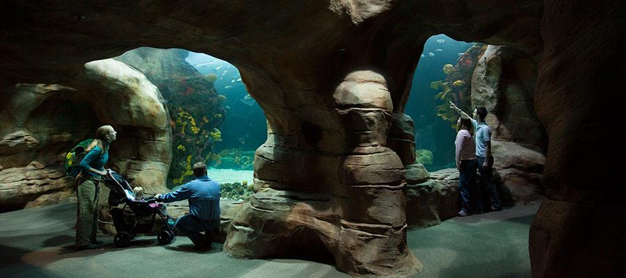 tenessee aquarium