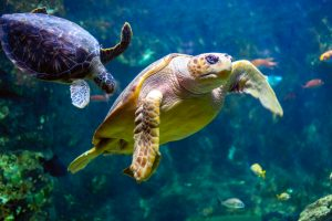 Turtle 300x200 - Your Complete Guide to Tennessee Aquarium