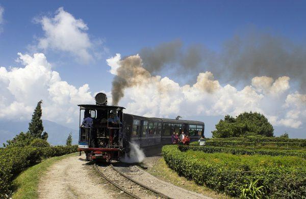 Darjeeling Tea: 5 Reasons To Taste It In India