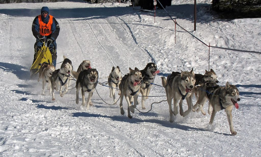 Dog Sledding MT