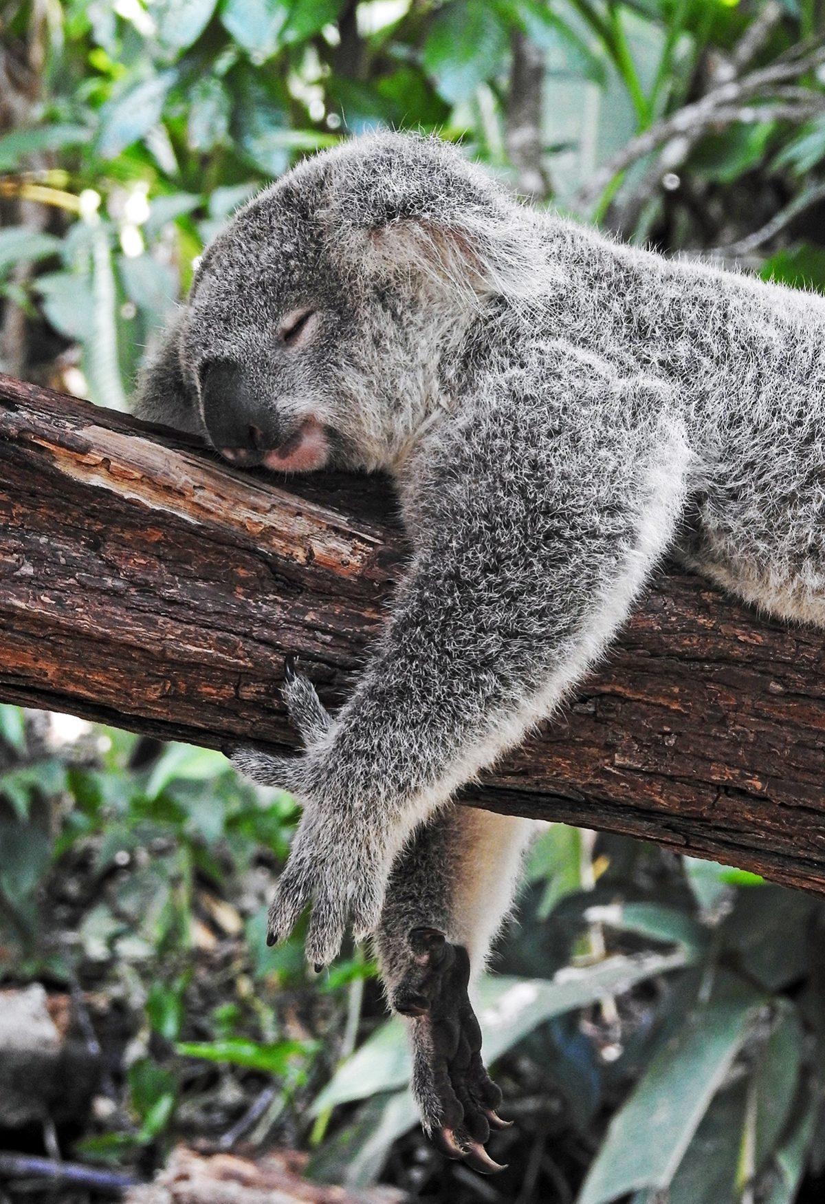 Australia Cities, Australian Tourism, Daintree National Park