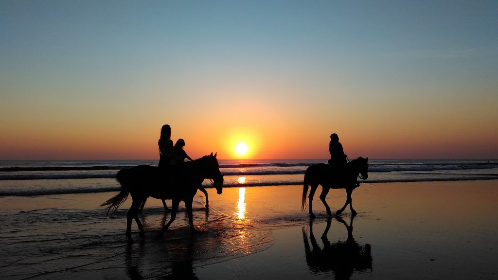 Evening sunset horse ride