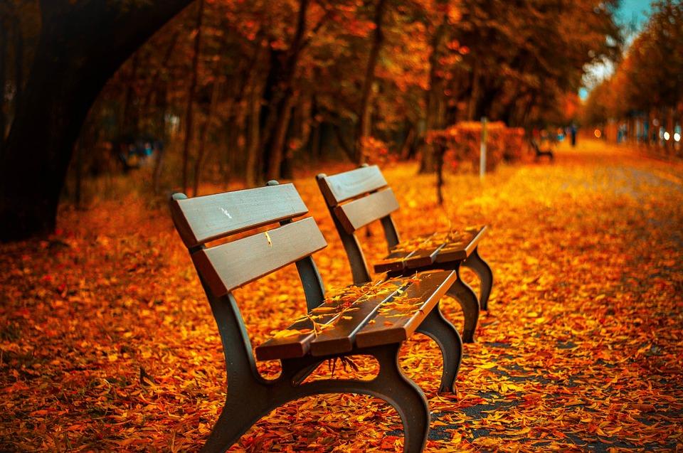 Lovely Lazienki Park, Warsaw