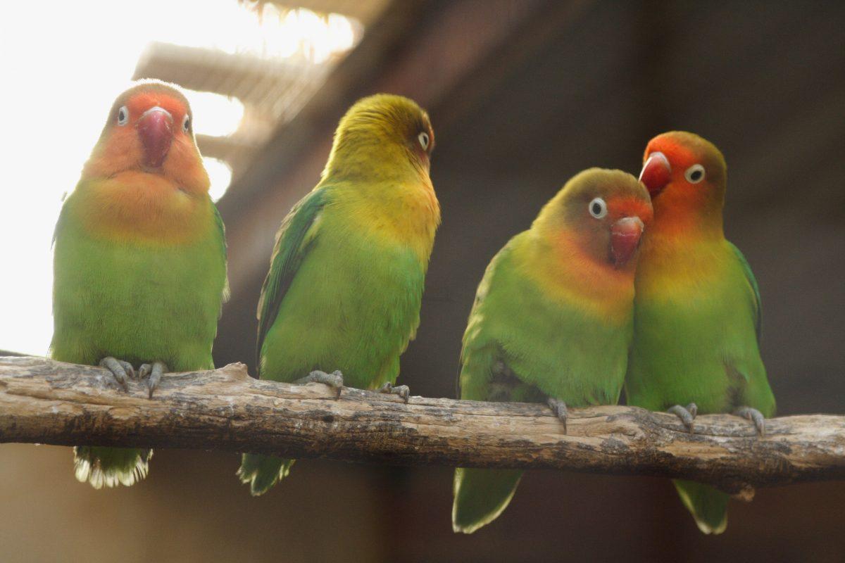 bird, kalbarri, australia
