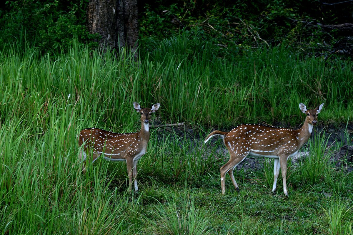 Nagarhole National Park weekend getaways from Bangalore