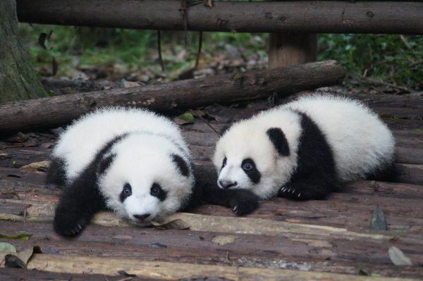 Best Things To Do In Chengdu, China