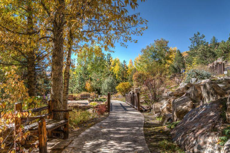 Shadow of a tree on a Colorado hiking trail