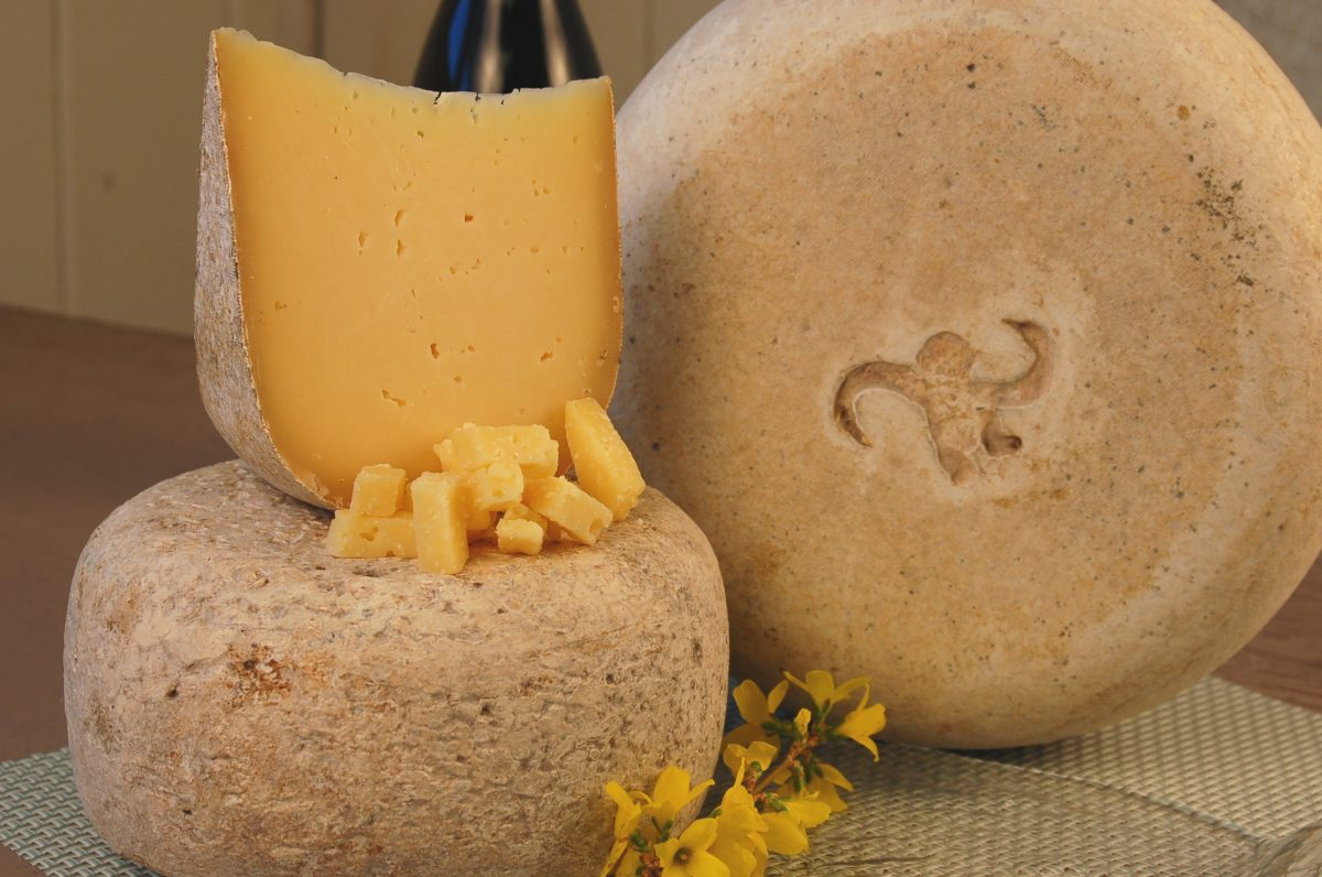 Situated in beautiful lush green Willamette Valley, the Willamette Valley Cheese Company is the perfect place to taste the many products of this award-winning cheese brand.