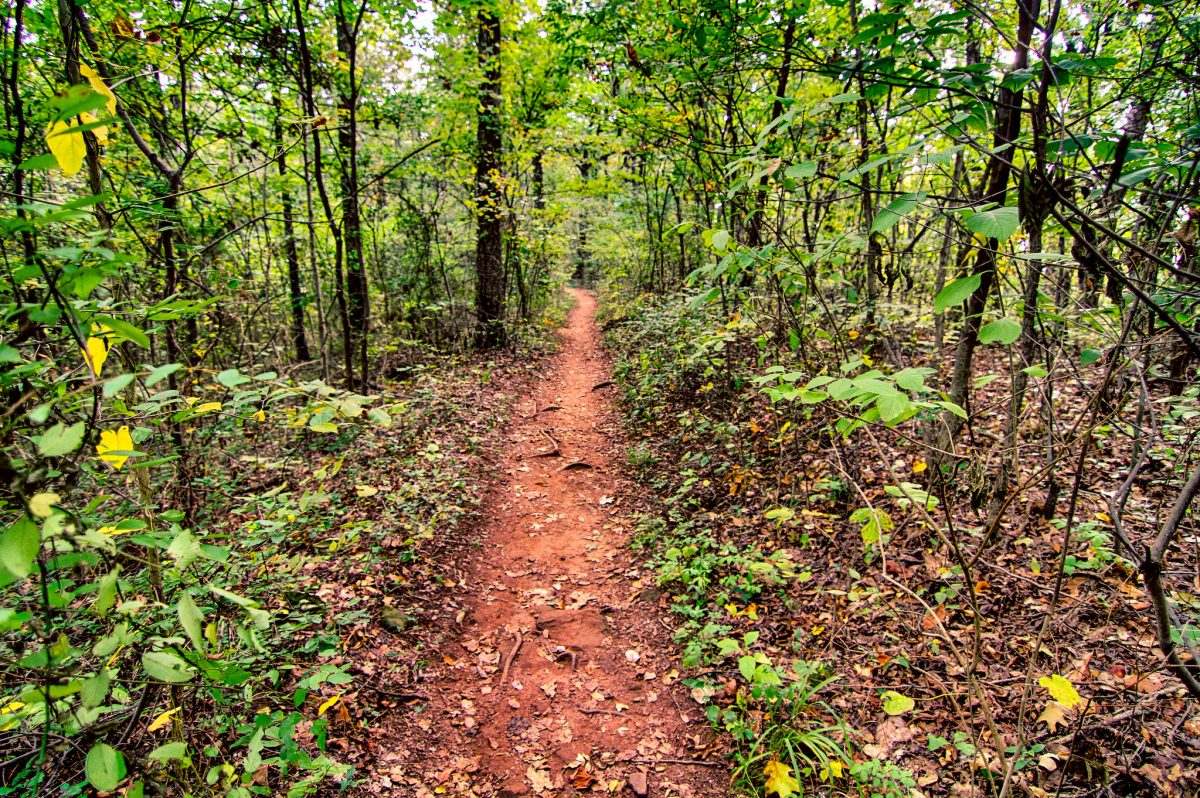Ruffner Mountain Nature Center is located within Ruffner Mountain Nature Preserve, a biodiverse 1,040-acre park that's perfect for endless hiking.