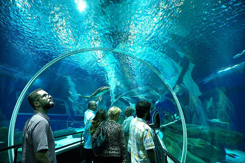 Inaugurated in October 2016, AquaRio contains 8,000 animals of 350 different species from all oceans.