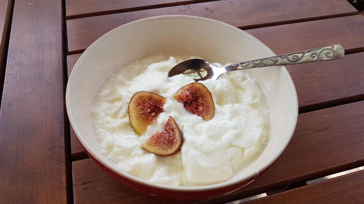 yoghurt, bulgarian food