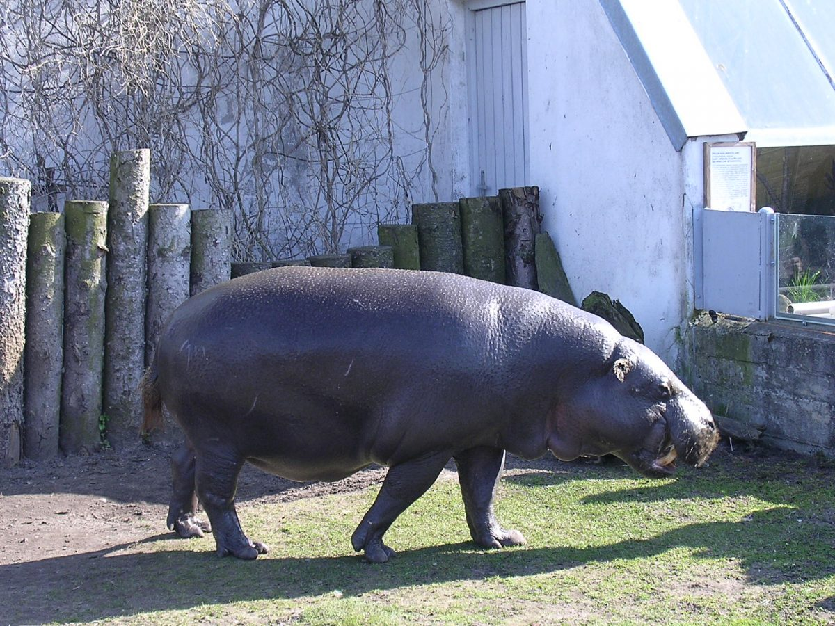Placed on 89 acres of land, the Tallinn Zoo is one of the best Zoos in the Baltic.