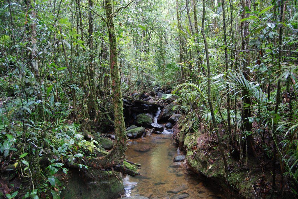 Kinabalu National Park, Kinabalu Park, sabah