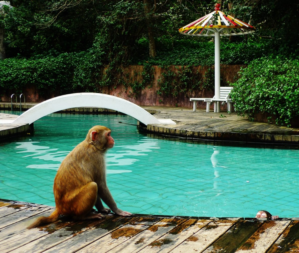 This state-protected nature reserve is located on the south coast of Hainan, near Sanya. It is home to more than 2500 macaque monkeys who are raised and trained here since 1965.