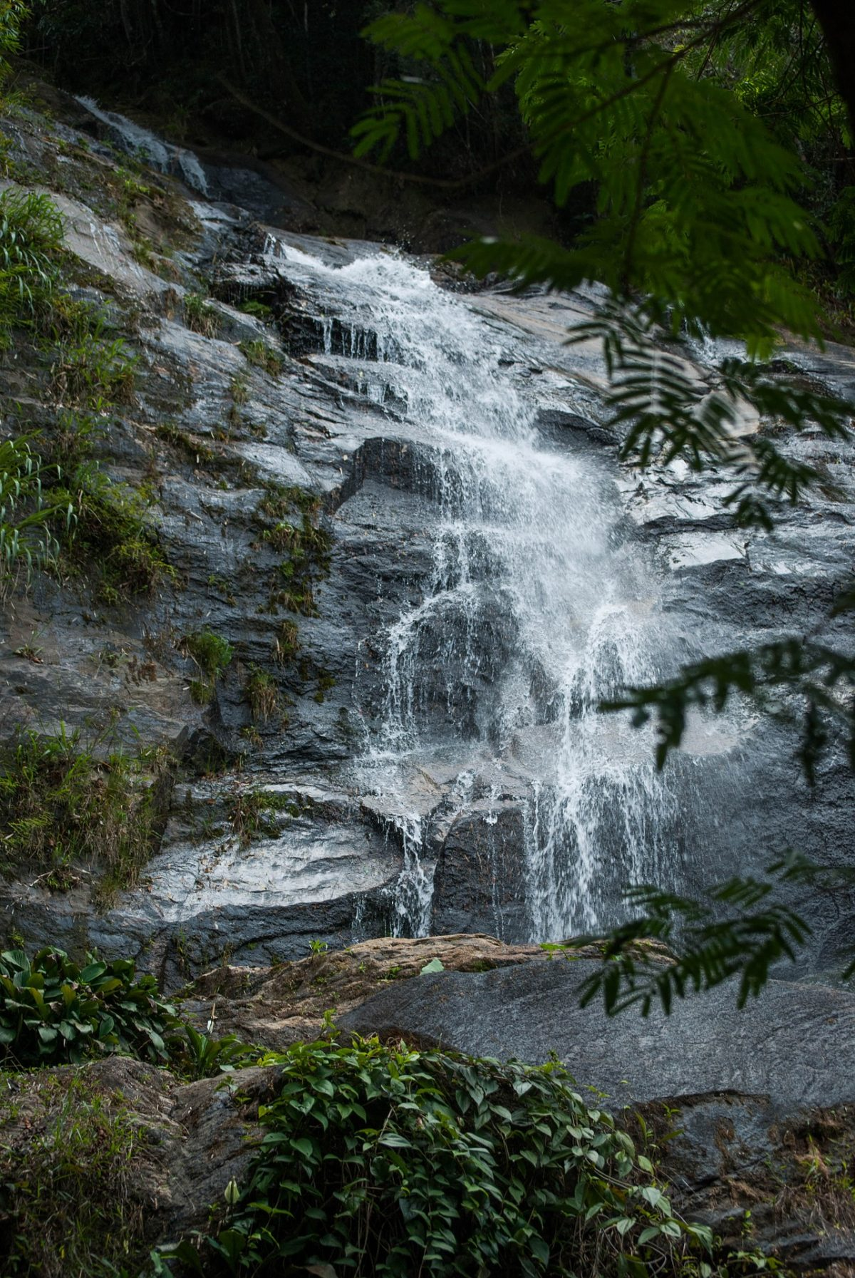 Tijuca is a tropical rainforest located within the city of Rio de Janeiro. It is considered the world's largest urban forest, covering some 39 km² of land.