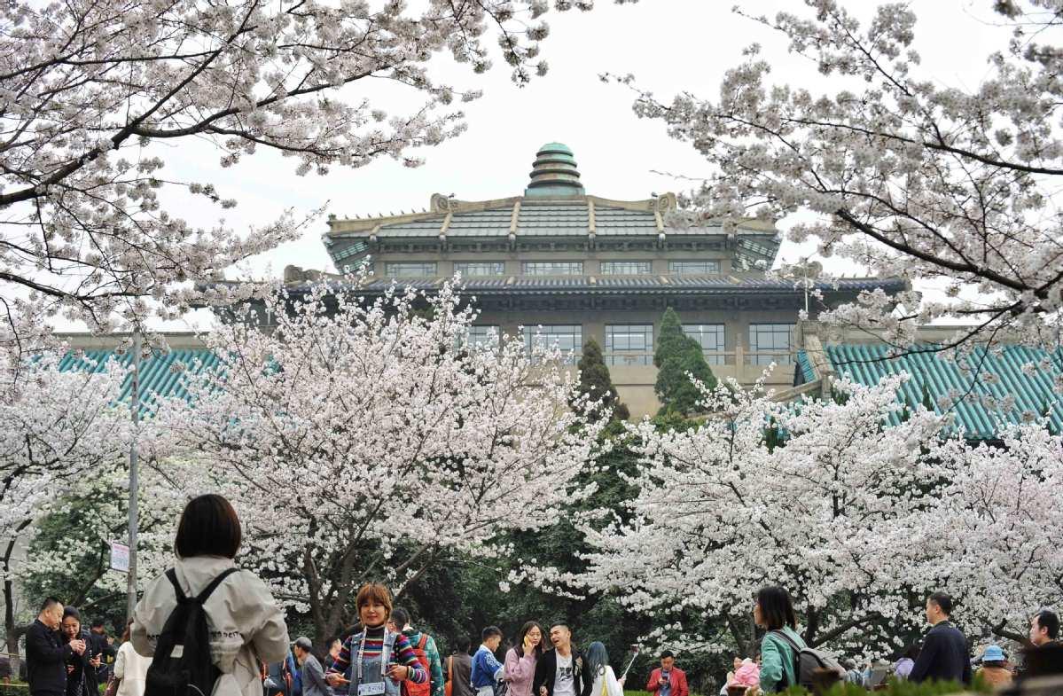 cherry blossom, wuhan