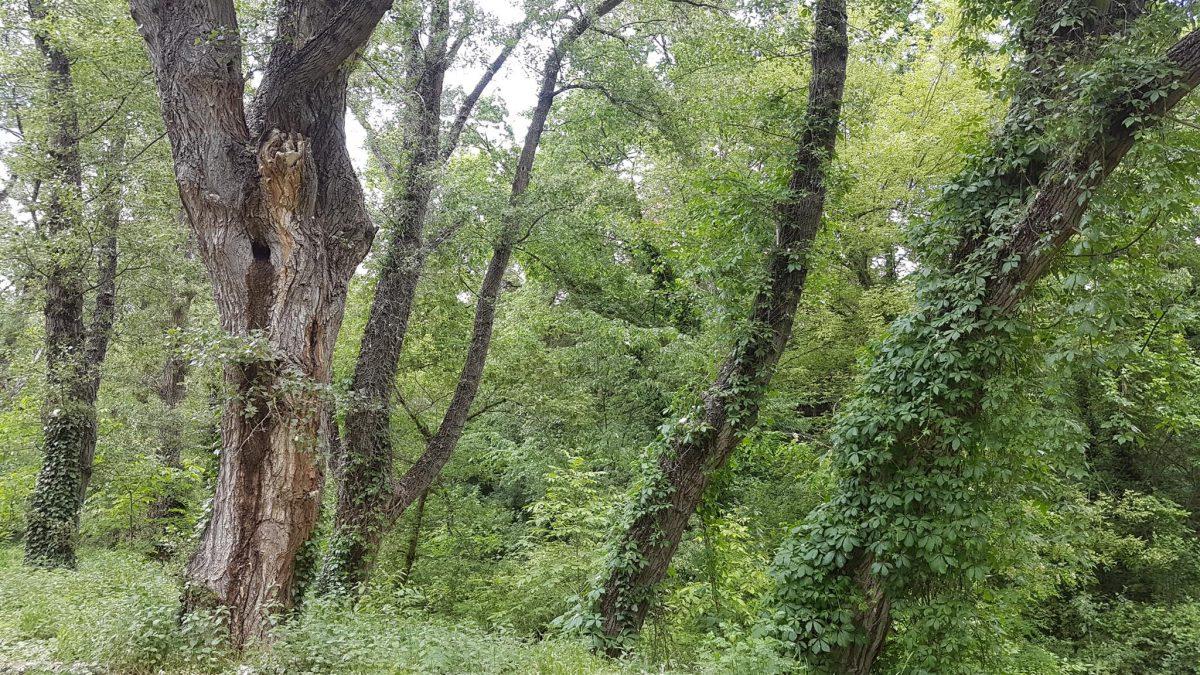 trees, park, yambol