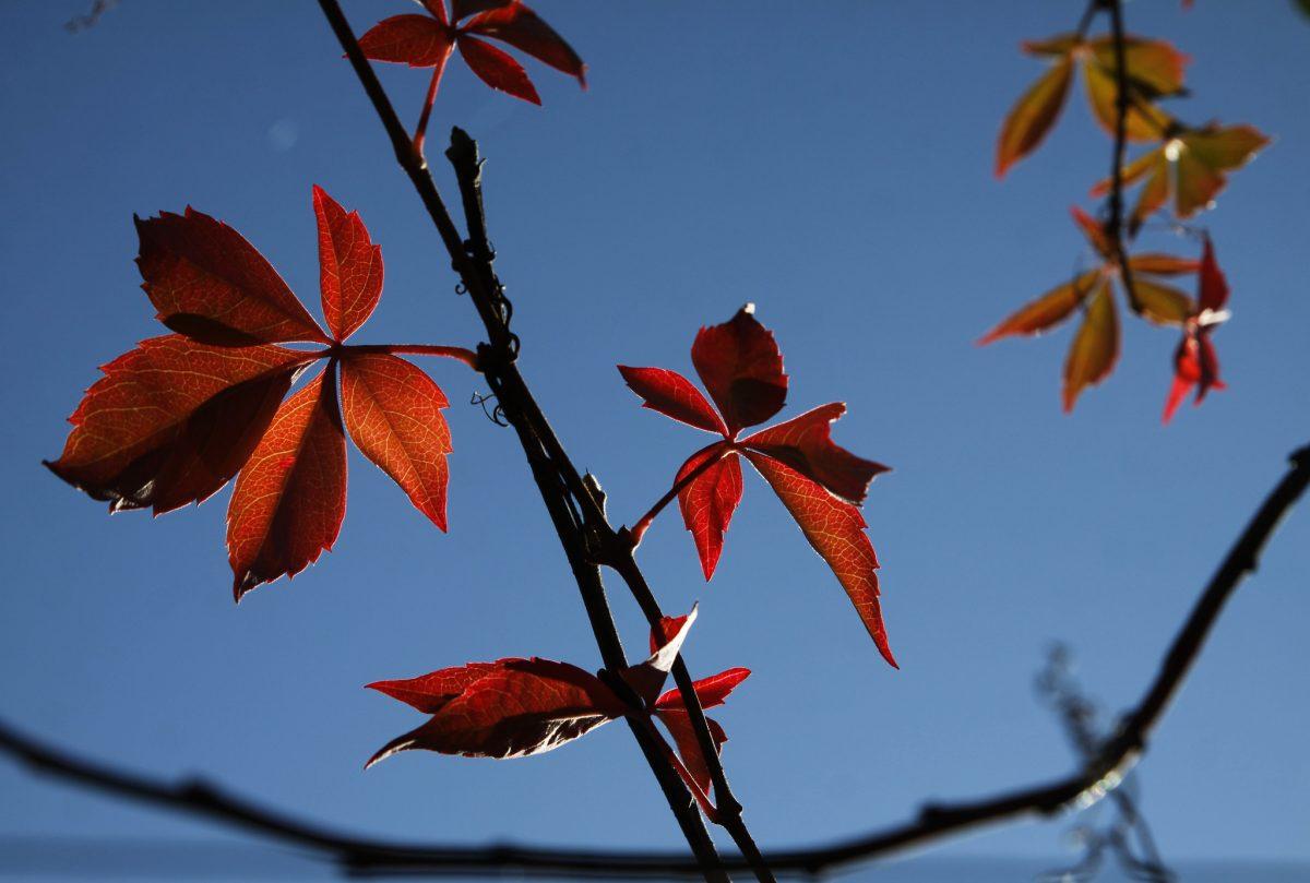 leaf, branch, akershus