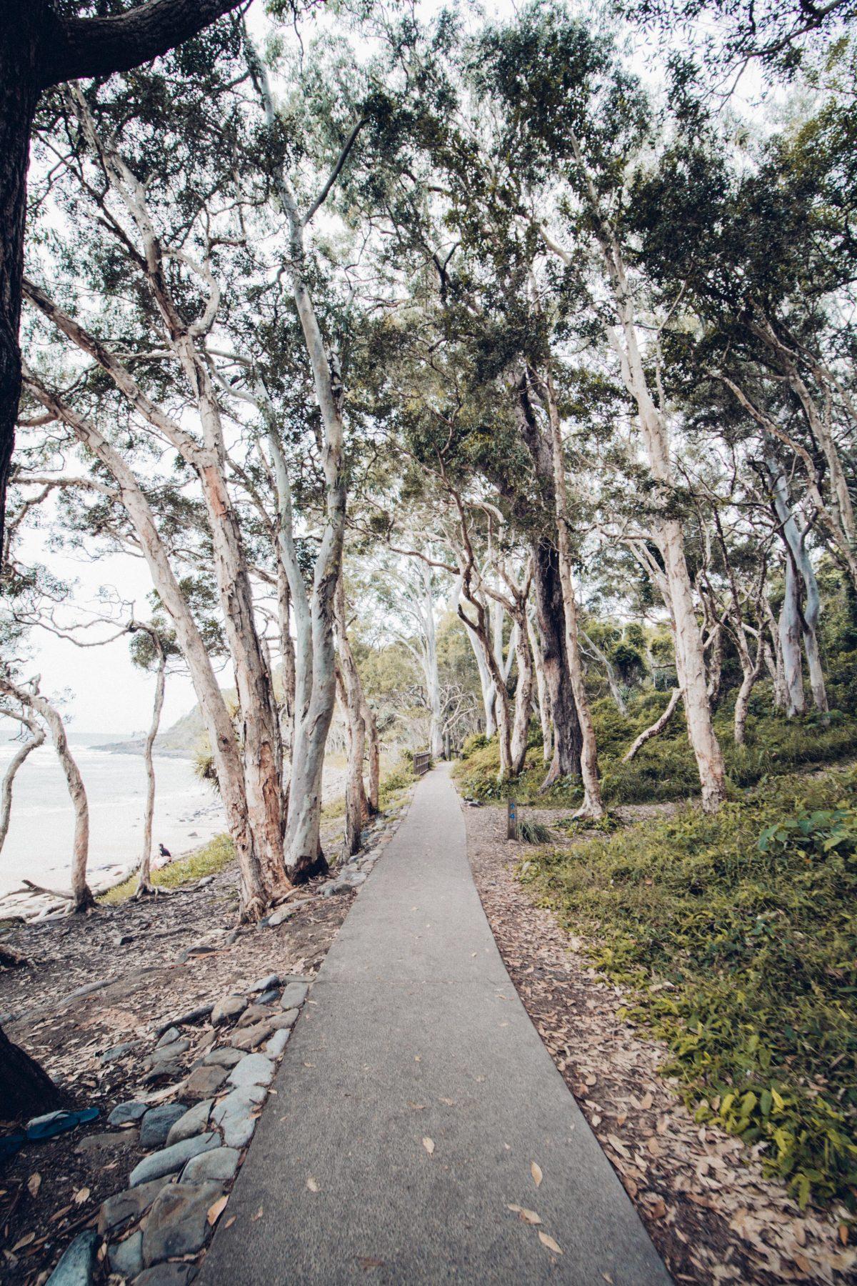 hiking trails, Noosa National Park