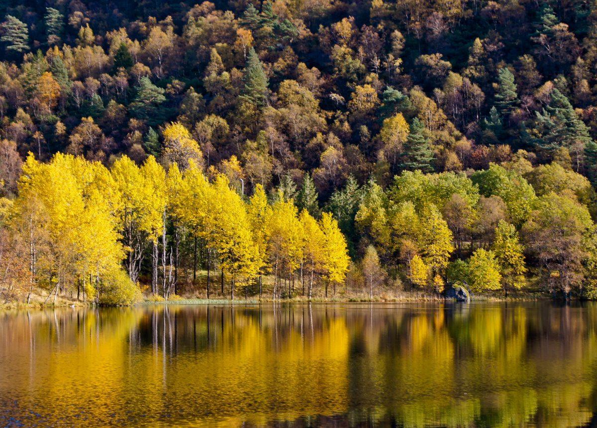 lake, tree, hordaland