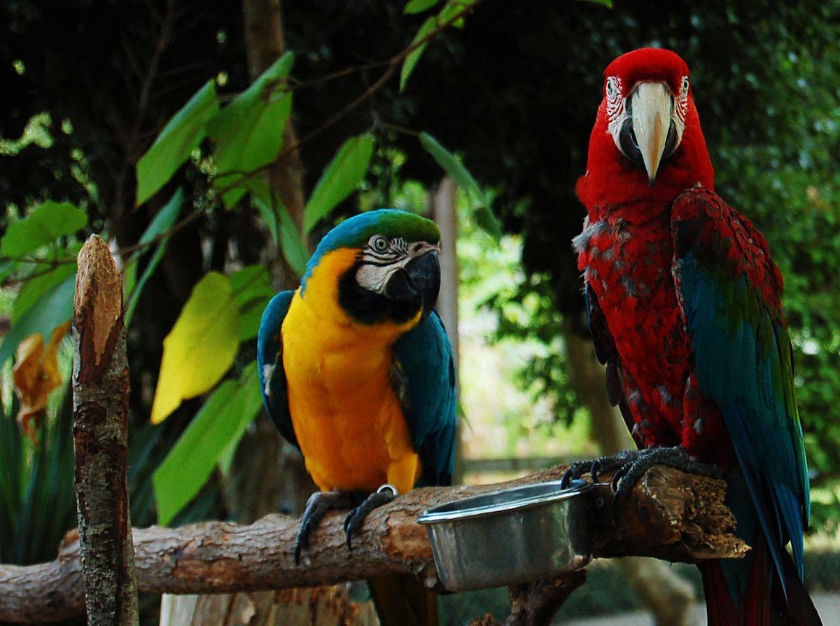 Gulf Breeze Zoo, Navarre, Florida