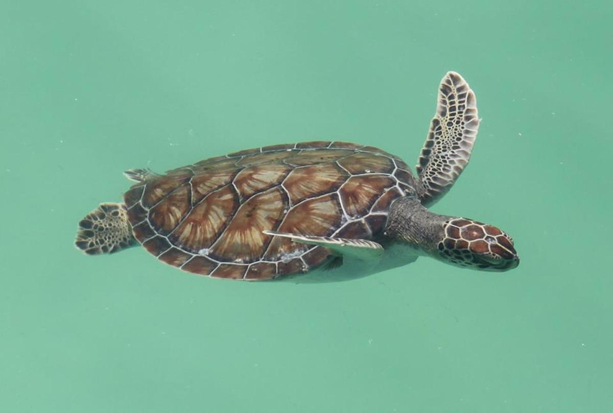 Navarre Beach Sea Turtle Conservation Center, Florida