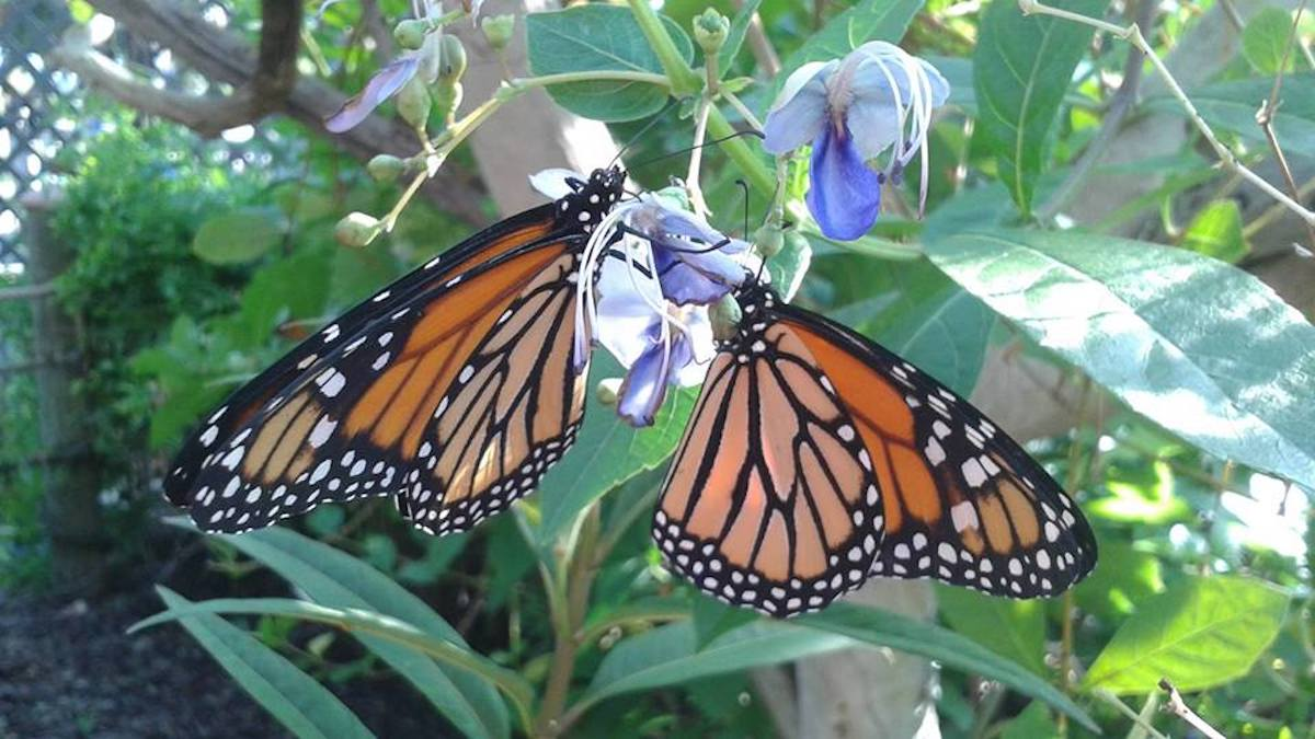 Panhandle Butterfly House, Navarre, Florida