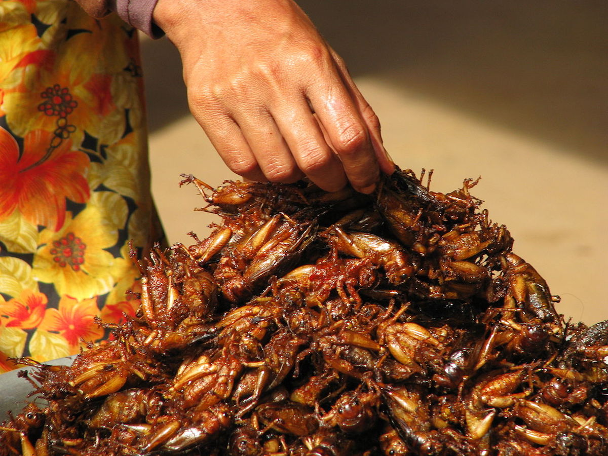 a photo of a woman's hand getting a fried insect