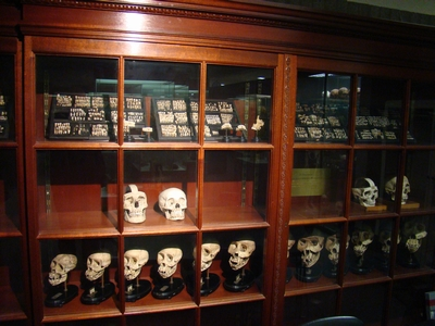 An intersting picture of a shelf of skulls in Museum Vrolik
