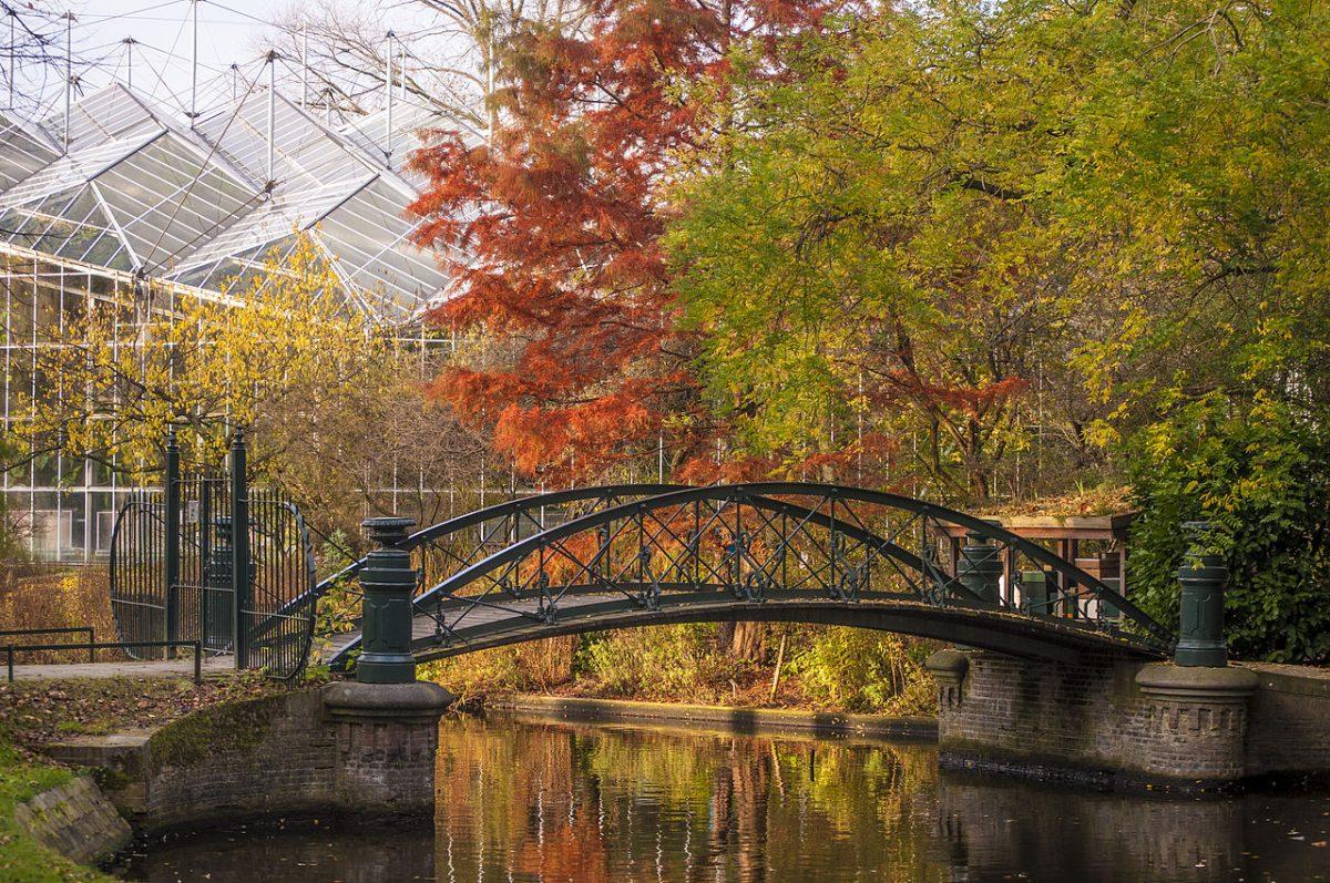 Beautiful view of a bridge, lake and overhanging trees at Hortus Botanicus
