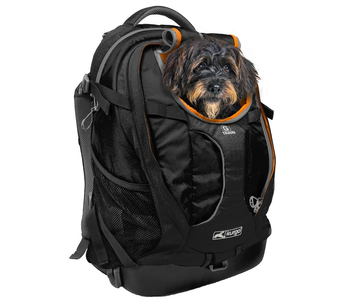 Photo of a small black Terrier with brown highlights peeking out from the top hole of the black Kurgo Dog Carrier Backpack