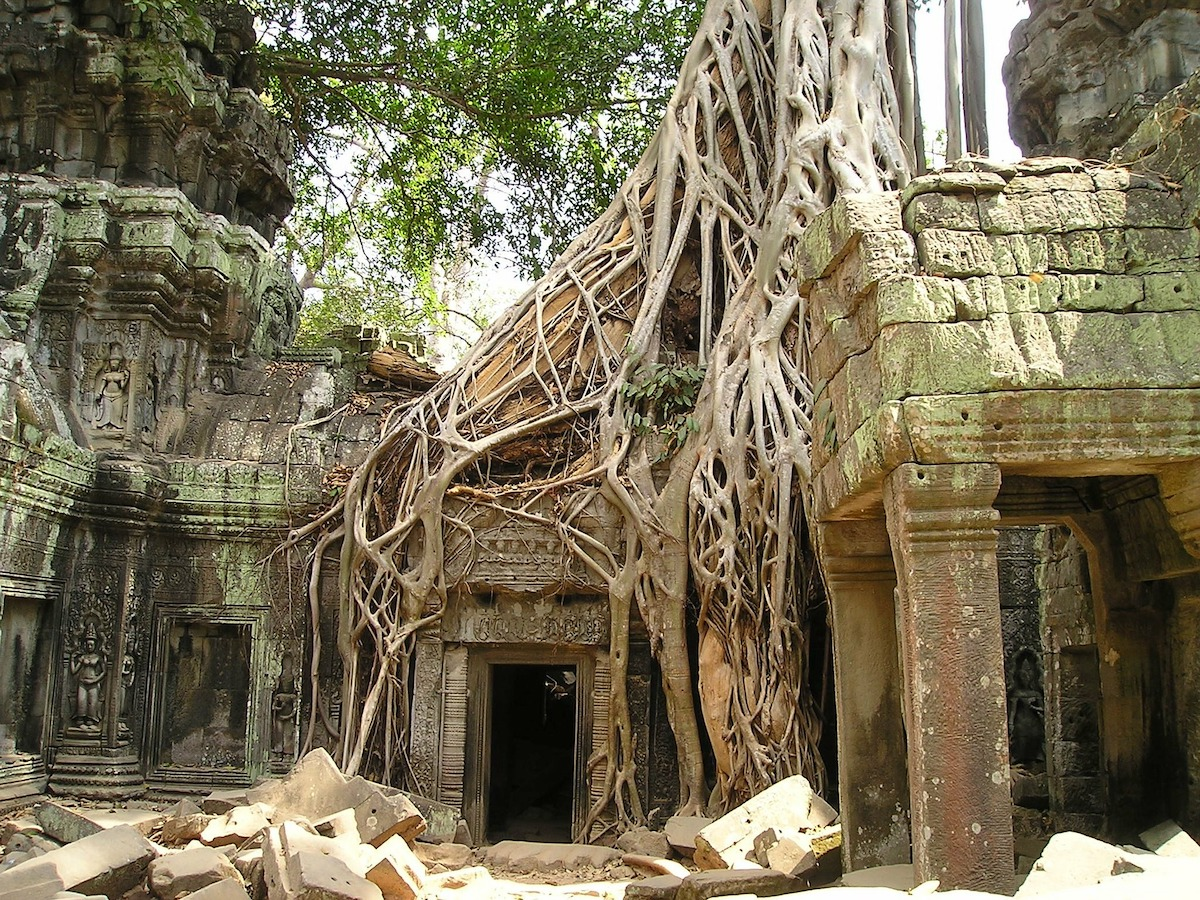 interior of the Angkor Wat Temple showing tree roots on structures