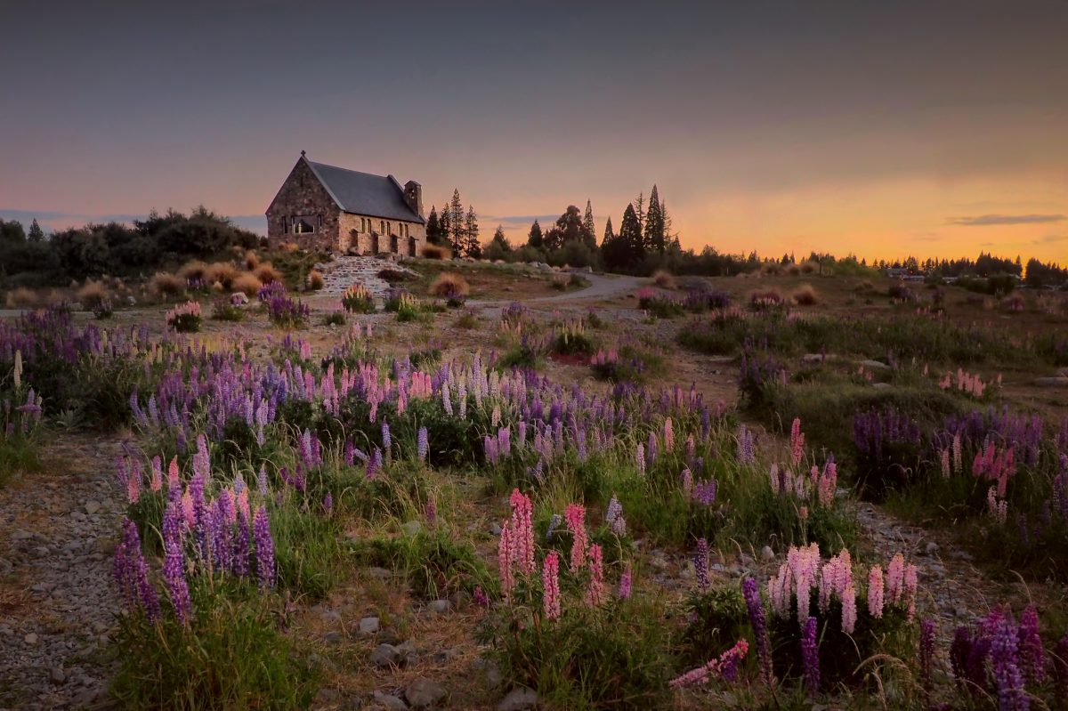 The Church of the Good Shepherd viewed from a distance with wild flowers at the forefront in Mount Cook National Park, New Zealand