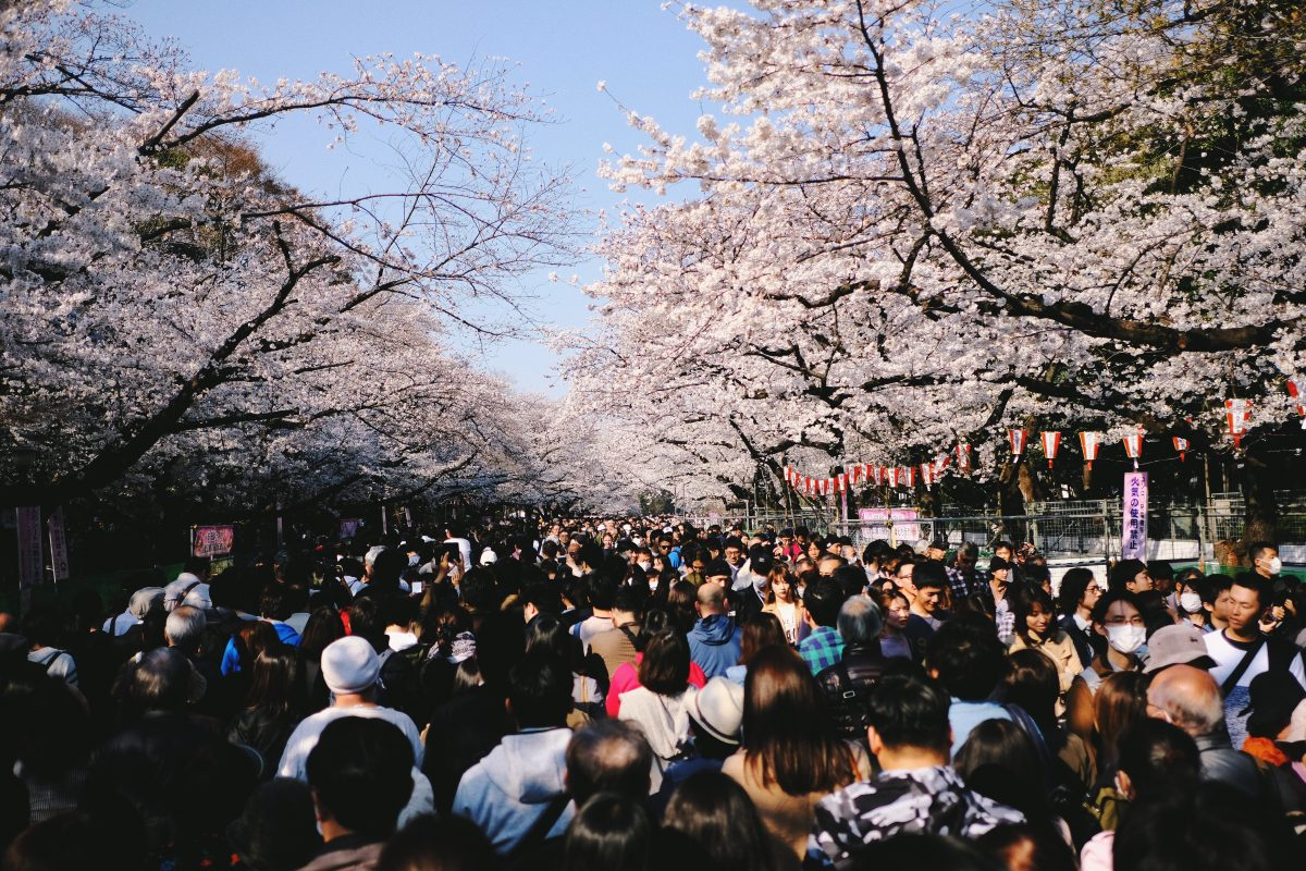 Hordes of people walk along the Sakura tree-lined Ueno Park, Tokyo, Japan