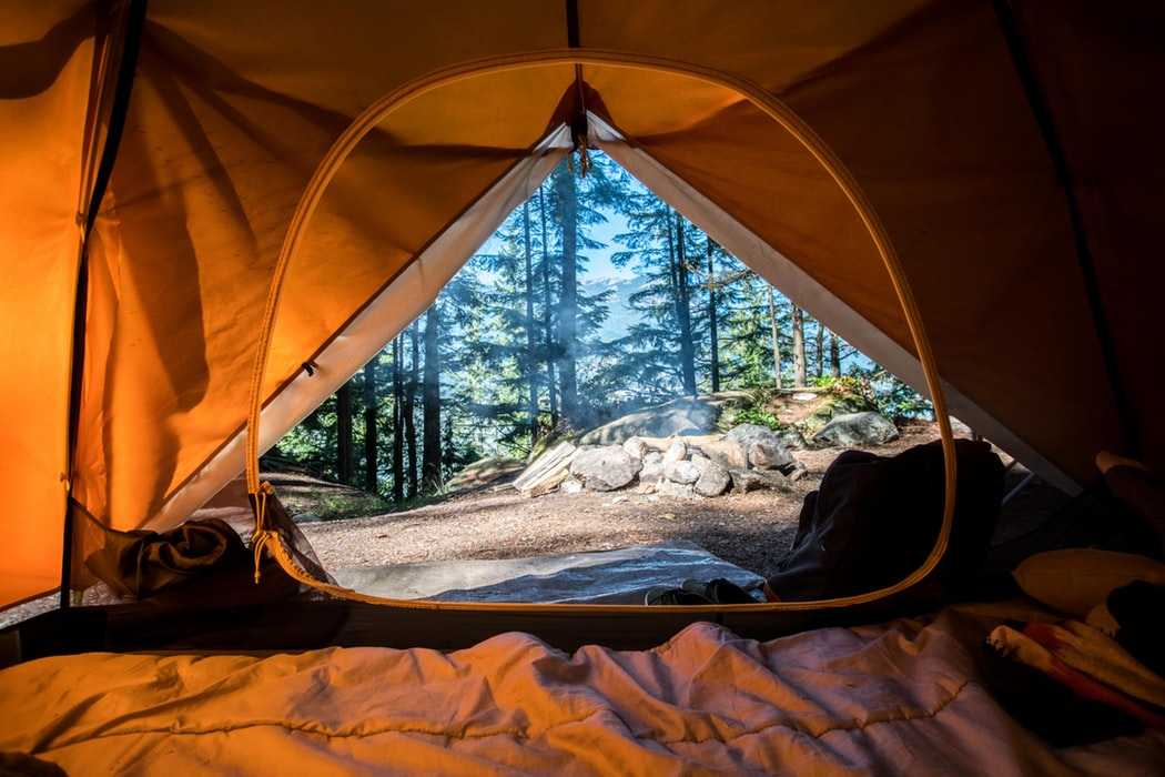 photo taken from the inside of an orange camping tent with view of the forest outside