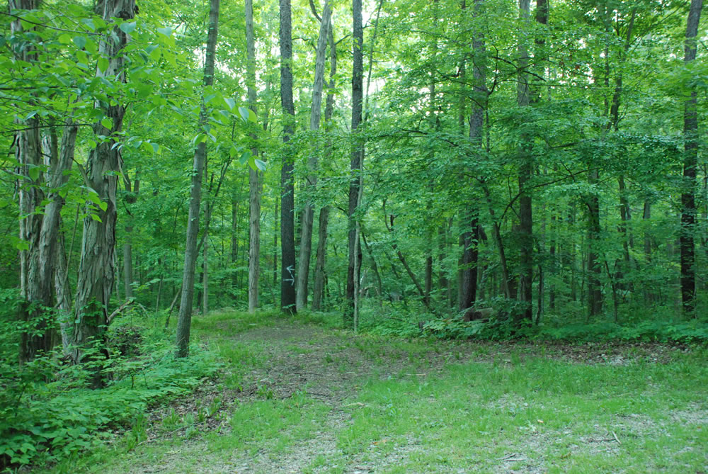 A photo of the green tress in a forest in Green Valley Nudist Camp