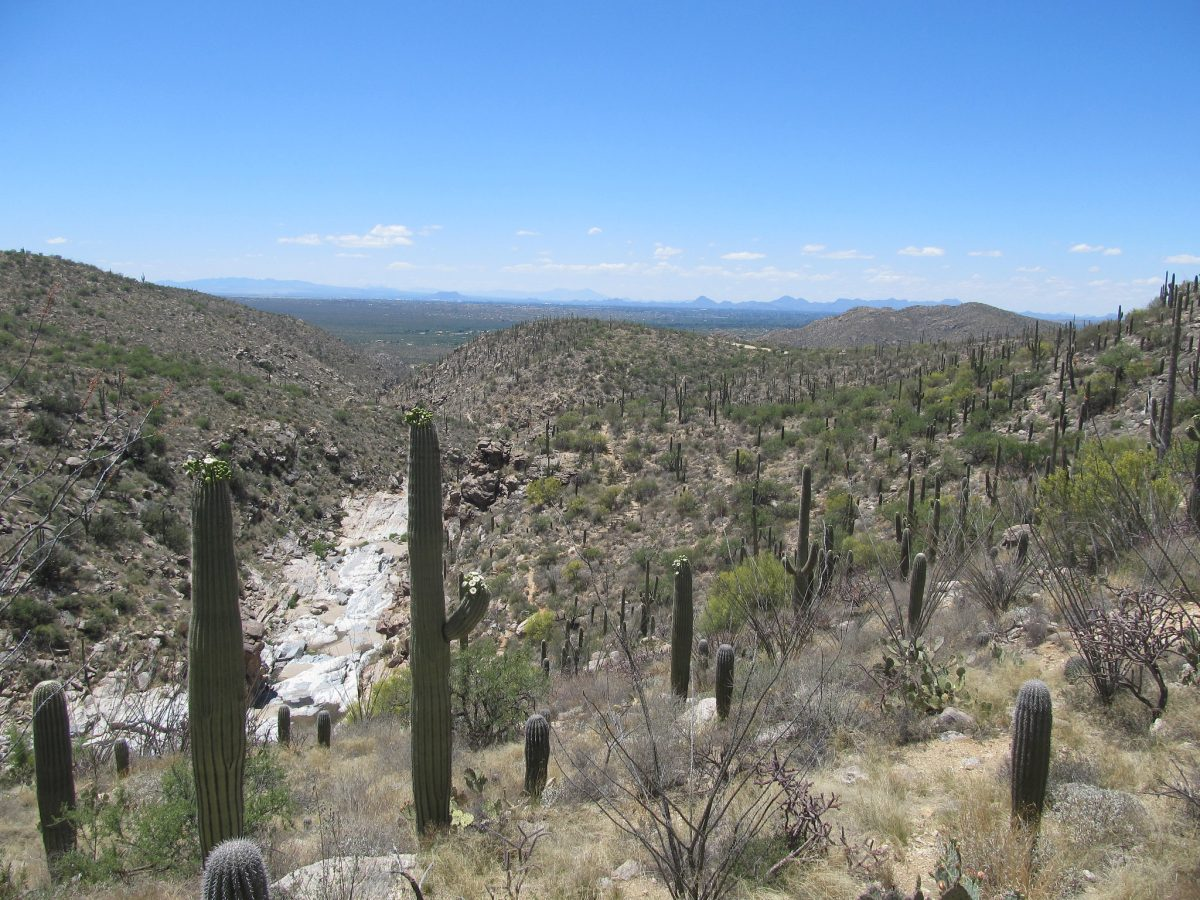 A view of cacti-riddled Tanque Verde Falls in Arizona with Tucson in the distance