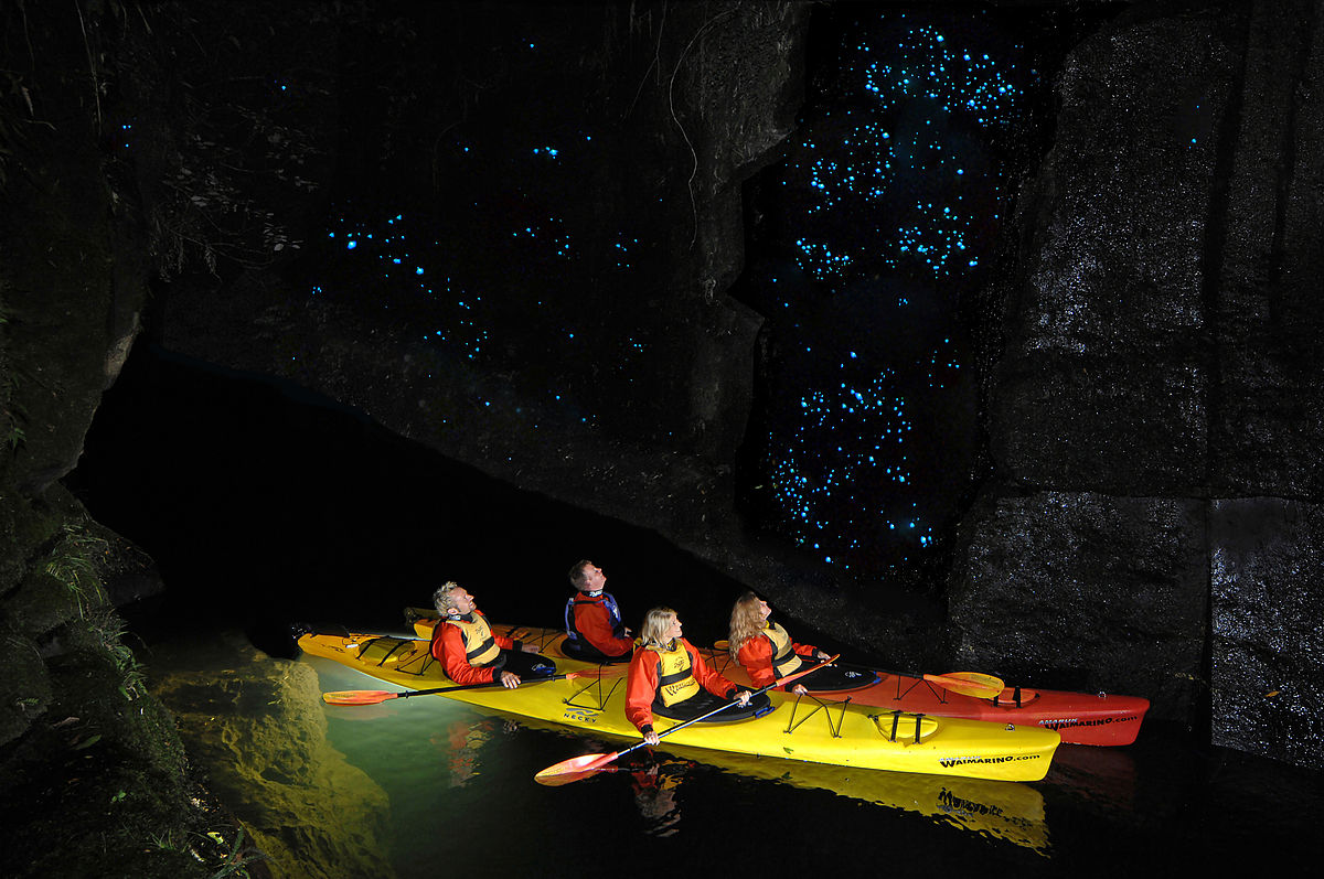 a group of people taking a tour at Lake McLaren to see the glow worms