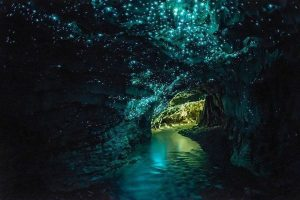 Glow worms' unique display of blue-green bioluminescence in Waitomo Cave, New Zealand